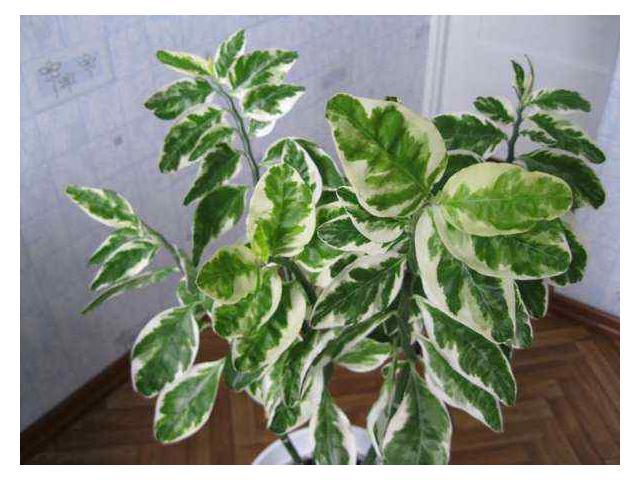 Комнатные цветы зеленые фото