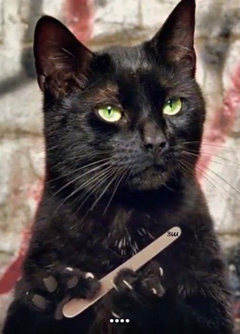 Фото кошка с пилкой для ногтей