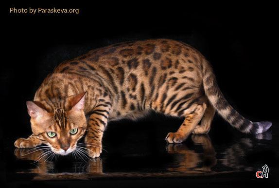 Самые красивые кошки на свете