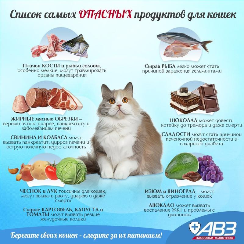 Почему нельзя кормить кошек рыбой и молоком