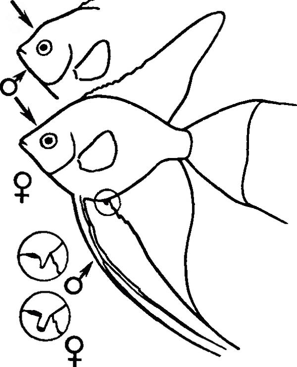 u-skalyarii-analnoe-otverstie