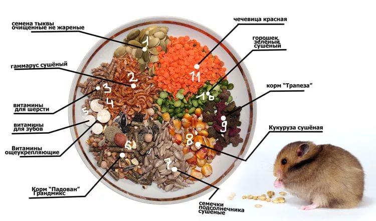 Как сделать корм для хомяка