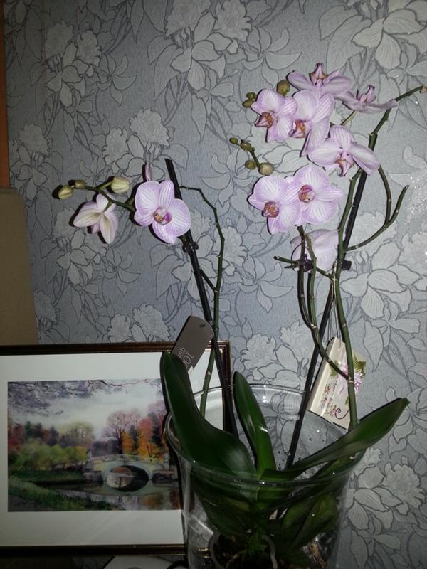 Как часто цветет орхидеями в домашних условиях