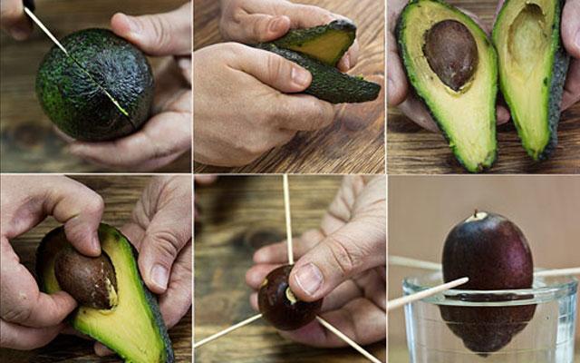 Как хранить авокадо в домашних условиях 788