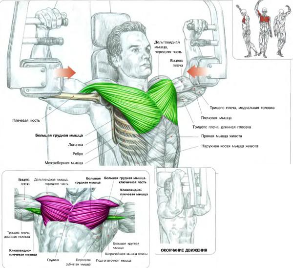 Как накачать грудные мышцы в домашних условиях. Уплотнение в груди у ребен