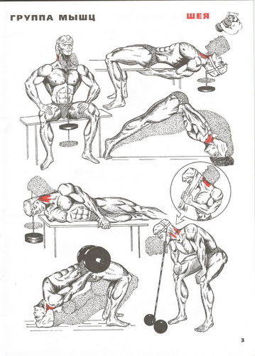 Как качать шею в домашних условиях для мужчин