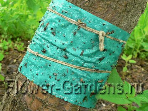 Ловчий пояс для деревьев  видео