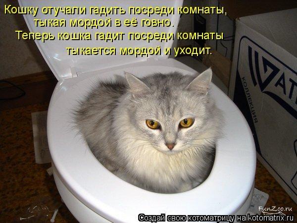 Почему котенок не ходит в туалет