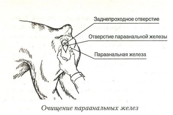 zadneprohodnie-analnie-pazuhi