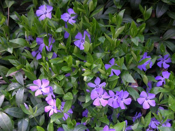 Можно ли цветы на кремацию