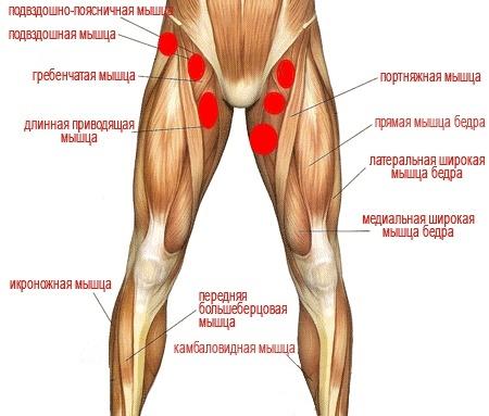 ужасно болят мышцы бедер