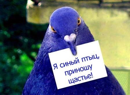 цвет ультрамарин фото:
