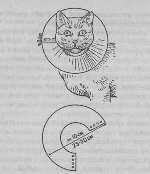 Как сделать защитный воротник для кошки
