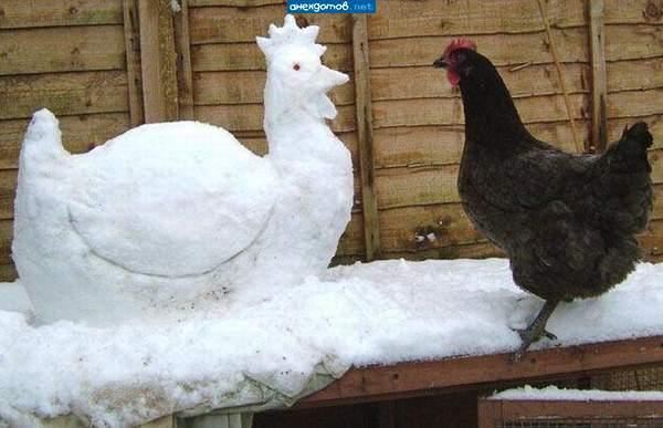 Курица из снега своими руками