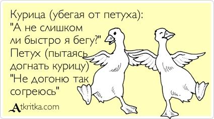Шуточное поздравление от курицы