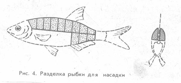 ловить судака на кусок рыбы