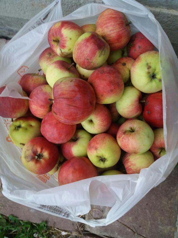 Как сделать яблоки слаще 807