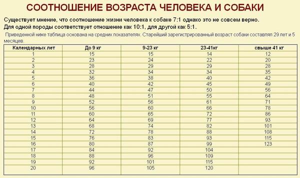 Есть примерная таблица пересчета возраста кошек на человеческий возраст