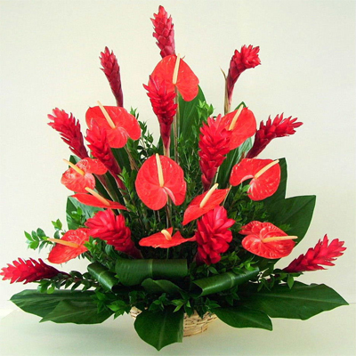 Цветы в горшках для мужчин