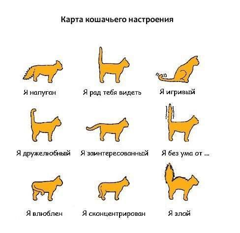 Настроение кошки по хвосту, как определить настроение ...: http://murlyka.net.ua/nastroenie-koshki-po-xvostu-kak-opredelit-nastroenie-koshki-po-xvostu.html
