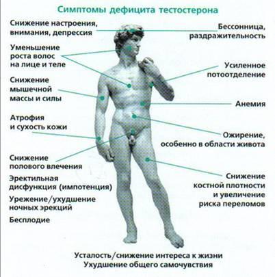 Ответы@Mail.Ru: Как повисеть уровень тестостерона?