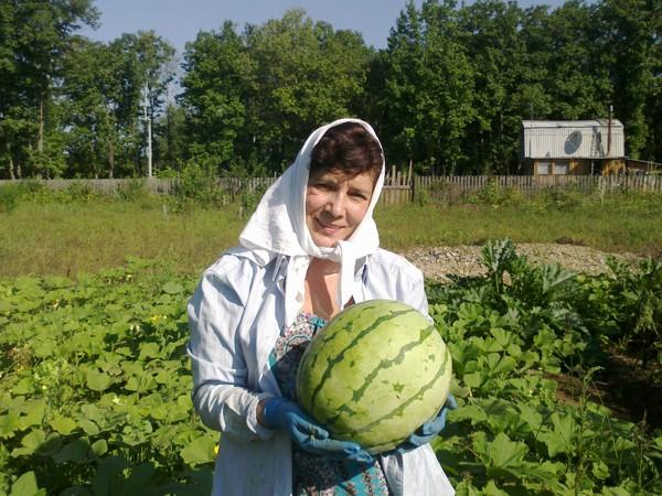 Выращивание арбузов на дальнем востоке 44