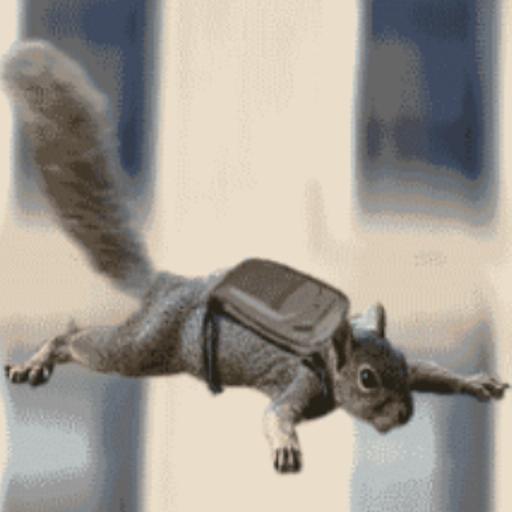 Crazy squirrel gif