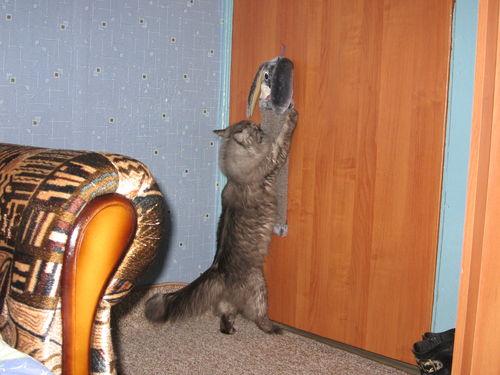 Что сделать если кошка просит кота в домашних условиях 759