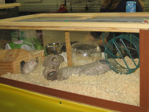 Обустройство аквариума для хомяка своими руками 80