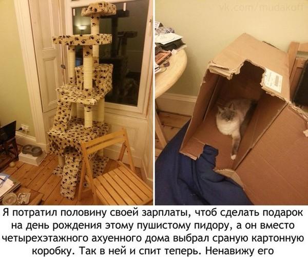 Ответы@Mail.Ru: Какой подарок сделать коту, чтобы он оценил?