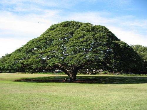 Большие деревья
