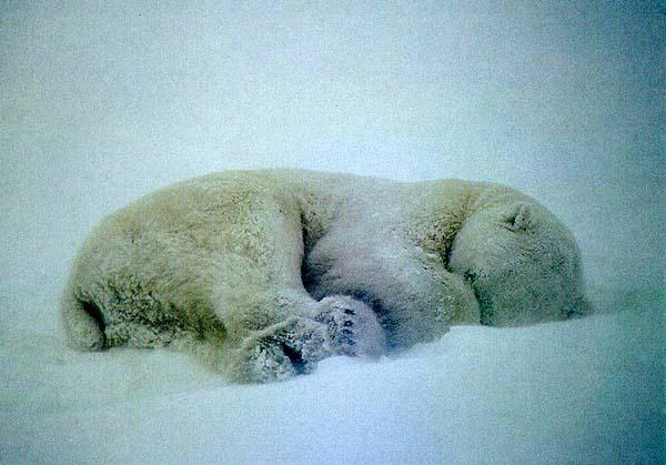 спутниковая карта видеть во сне голову медведя выходные дни