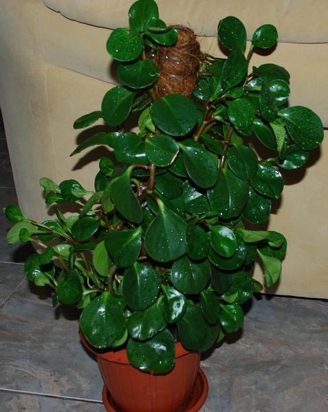 Цветок с плотными зелеными листьями фото