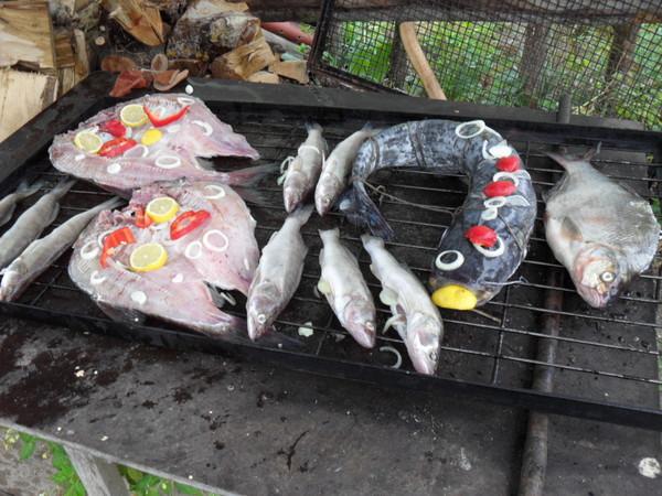 какие рыбы можно ловить на мотыля