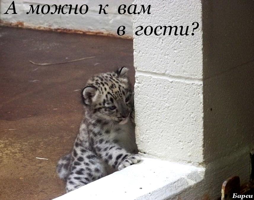 mnogo-muzhchin-konchaet-vnutr-odnoy-devchonke