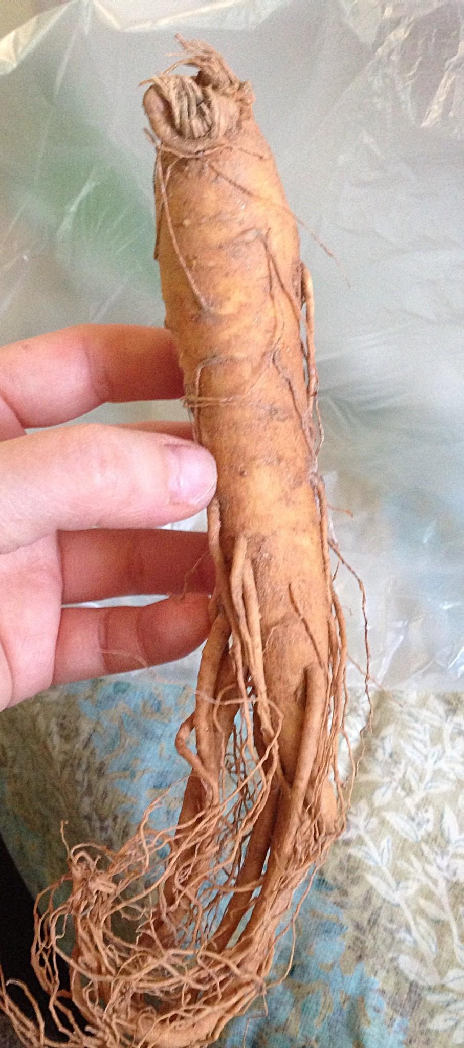 Как сделать женьшень корень