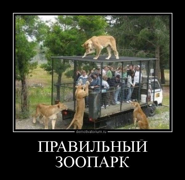 Анекдот Про Зоопарк