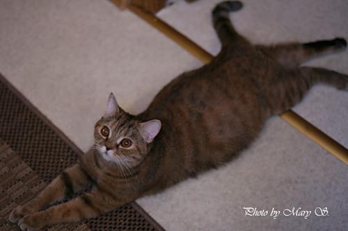 Почему кошки ложатся беременным на живот