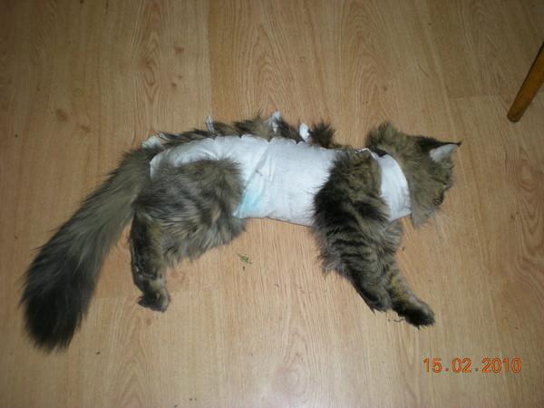 Кошка слабая после стерилизации