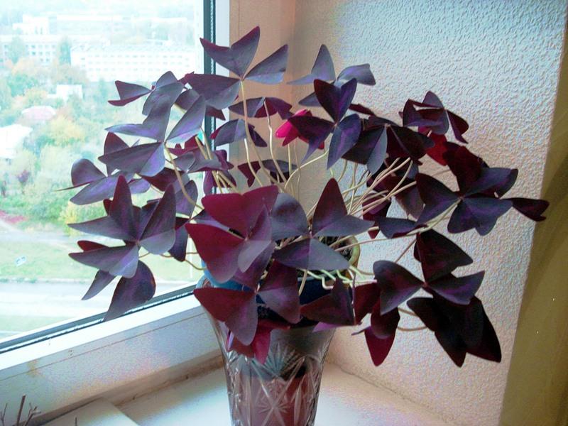Фото комнатные цветы доброе утро