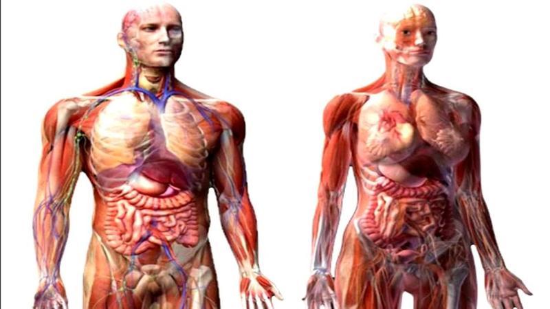 Когда человек стареет, он испытывает следующие изменения в теле: мышечный