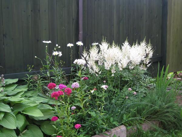 Многолетние цветы которые не надо выкапывать на зиму
