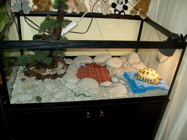 Обустроить террариум для черепахи своими руками