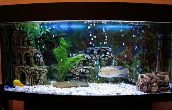 Как красиво оформить аквариум на 100 литров своими руками 52