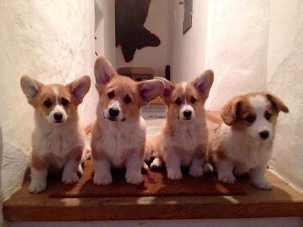 фото собаки воробьева алексея