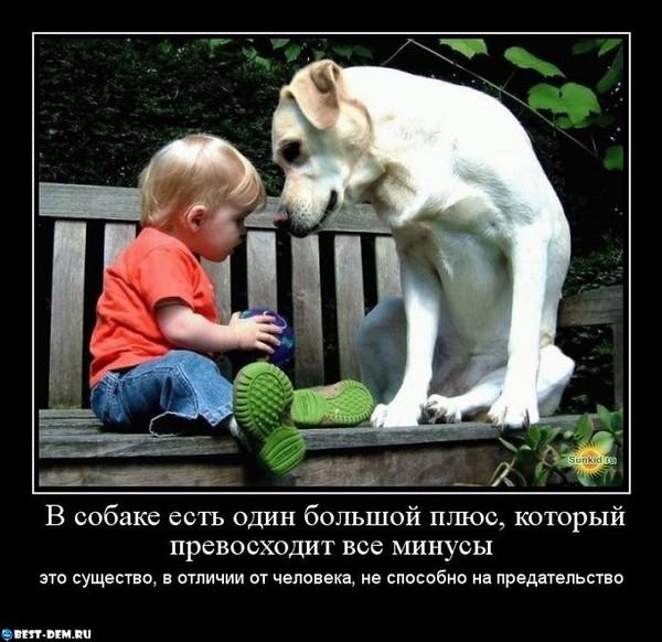 Статусы про собаку и любовь