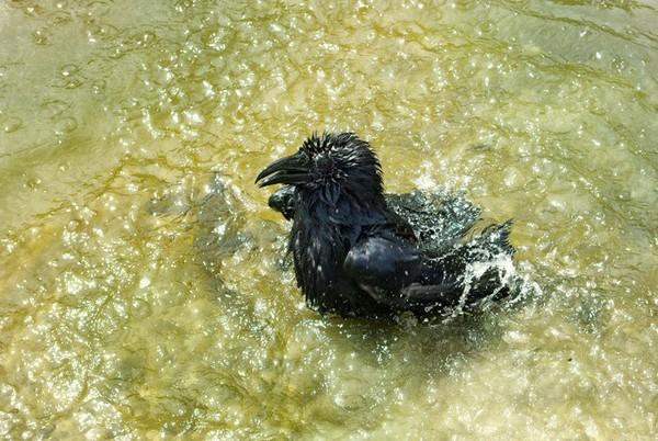 Мокрая курица сделать как