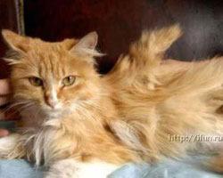Самое раннее упоминание о крылатых кошках датируется июнем 1842 года...