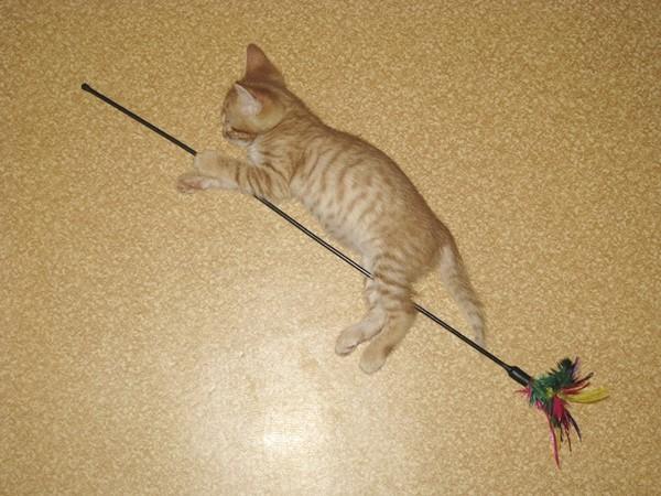 Как сделать метлу летающий