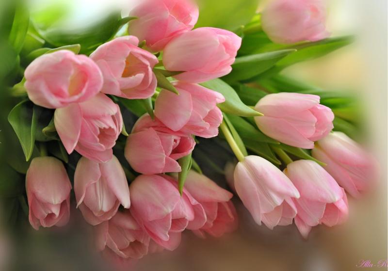 Тюльпаны красивая открытка 12